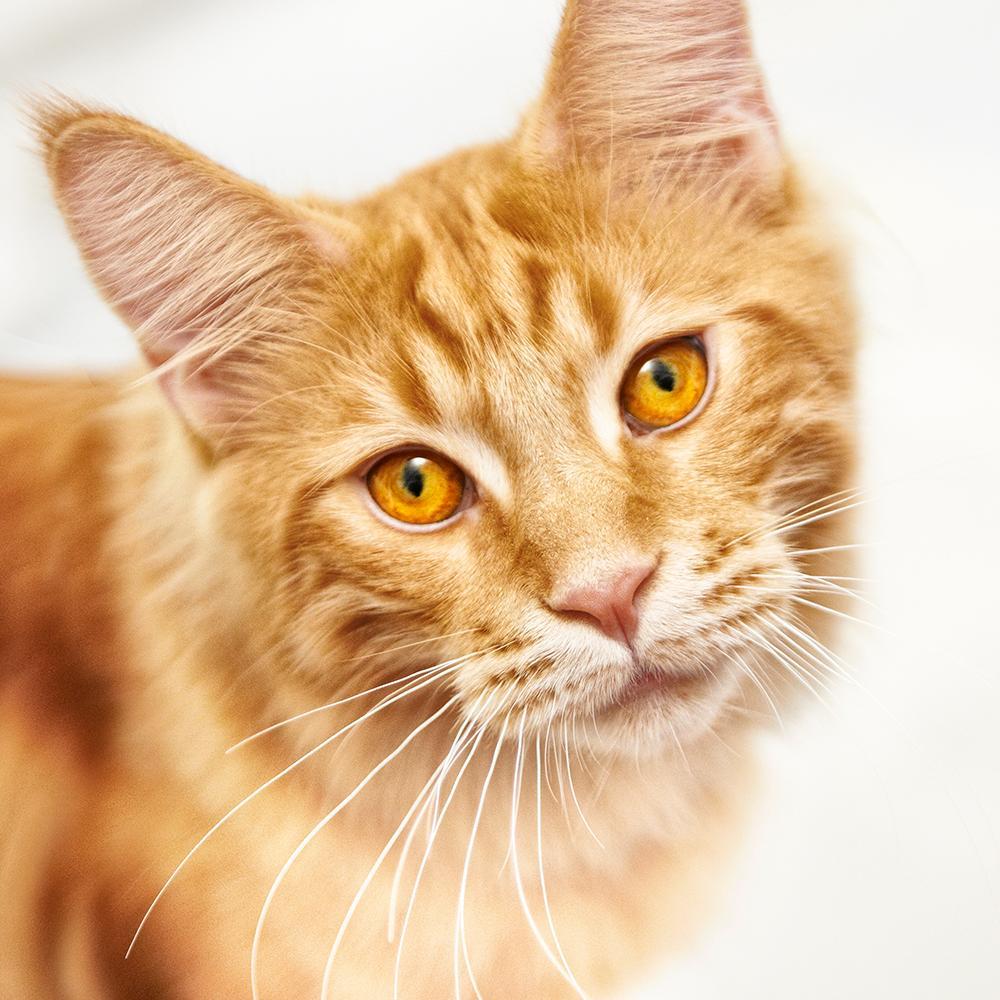 Purina One Smartblend Dry Cat Food